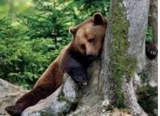 Caccia all'orso – La prudenza non è mai troppa