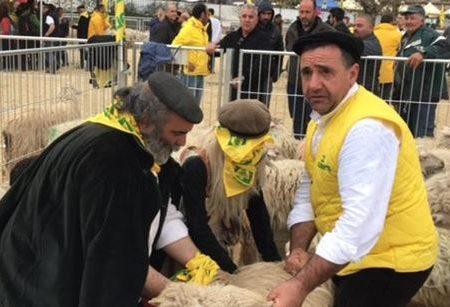 Giornalista e pastore sardo