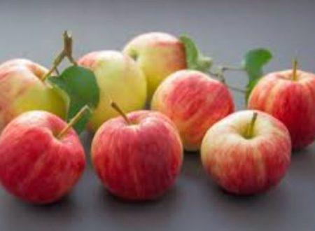 Carabiniere e i semi di mela