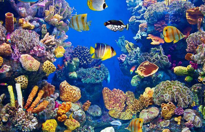 Cose da sapere quando si esce con un acquario