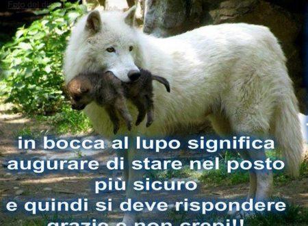 In bocca al lupo significa …