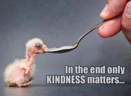 Alla fine solo la gentilezza conta