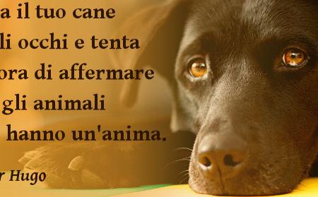 Fissa il tuo cane negli occhi
