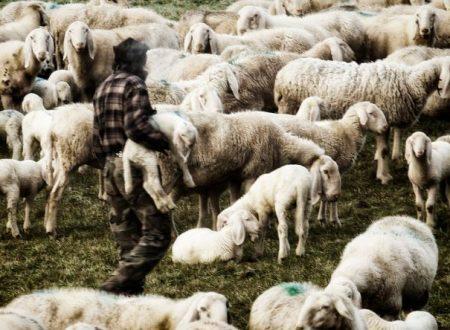 Il pastore e il consulente