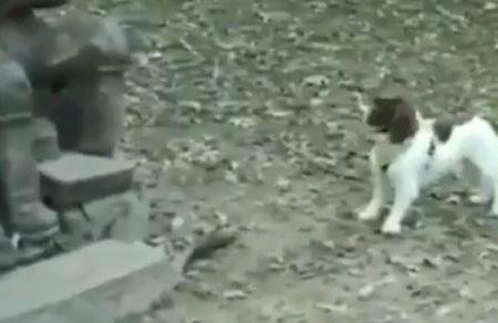Il cucciolo vuole giocare