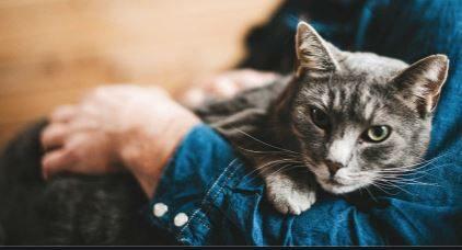 Un uomo odiava il gatto di sua moglie